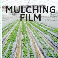 PE Film / Munch Film / Agricultural Film