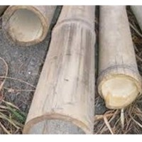Poles (culms) of Bamboo