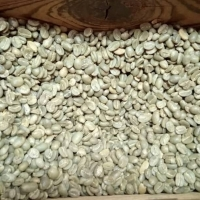 Whased Arabica Green Coffee