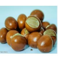 Shea Kernels (Nuts)