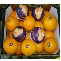 Fresh Citrus Oranges