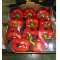Egyptian Capsicum Peppers