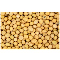 Soybean And Soy Meal