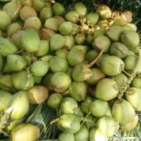 Fresh Green Tender Coconut
