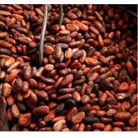 Bulk  Natural Fermented  Cocoa Beans