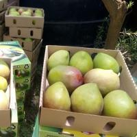 Kenya Apple Mangoes