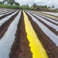 Yellow Mulch Films
