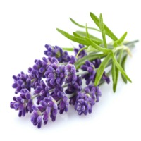 Lavender and Mint Massage Oil