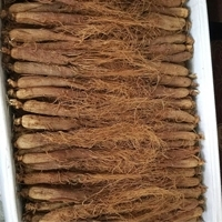 Chinese Red Ginseng Root