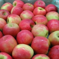 Cripps Pink Apples