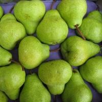 Packham Triumph Pears