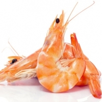 Cold-water Prawn, Lux,  Cooked & Peeled, Msc
