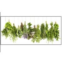All Kind Of Fresh Herbs