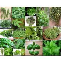 All Kind Of Fresh Leafy
