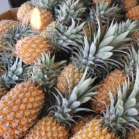 Hot Sale Fresh Pinapples