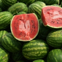 Fresh Sweet Water Melons