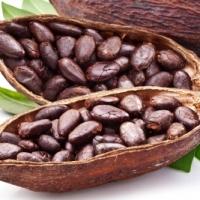 Sri lankan Cocoa Beans