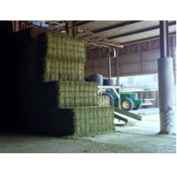 Omani Animal Cattle Feed Suppliers, Manufacturers, Wholesalers and