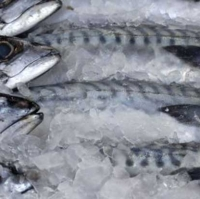 Whole Round Frozen Sardine Fish