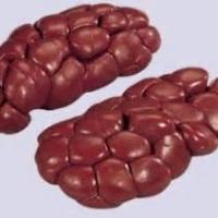 Frozen Beef Kidney