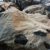 Big Dried And Wet Salted Donkey Hides