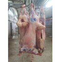 Halal Chilled Lamb Full Carcass