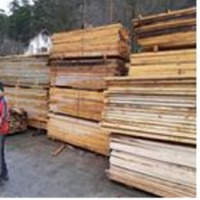 Beech And Oak Wood