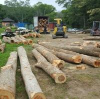 Camphor Logs