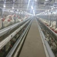Broiler Breeder 'H' Frame Cages Systems
