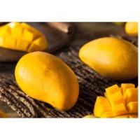 Mango Pulp & Concentrate