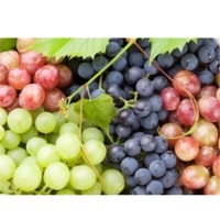 White & Red Grape Puree & Concentrate