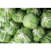 Fresh Red and Green Cabbage