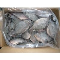 Fresh Frozen Tilapia Fish