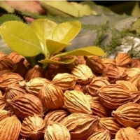 Cardamom (Fructus Amomi Aromatici)