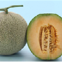 Muskmelon Seeds For Planting