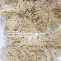 Dried Cottonii - Sea Moss Wholesale Price