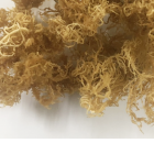 Irish moss - Eucheuma Cottonii wholesale price