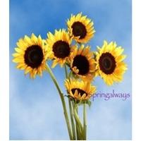 Springalways Sunflowers