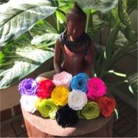 Preserve Roses Rainbow and Bi Color Jumbo