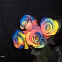 Springalways Tinted Roses