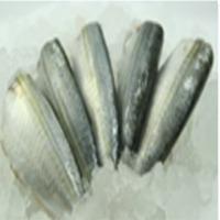 Canned Mackerel /Sardine