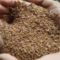 Methi or Fenugreek Seed