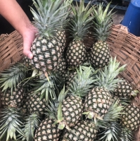 Fresh Pineapple Fruit From Thailand