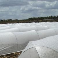 Polypropylene Spun-bond Non Woven Fabric