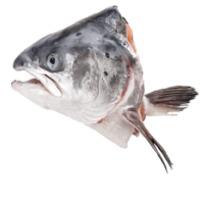 Norwegian Atlantic Salmon Head  (Frozen)