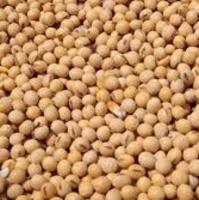 New Crop Bulk Yellow Soybeans