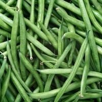 Bulk Iqf Frozen Fresh Green Bean