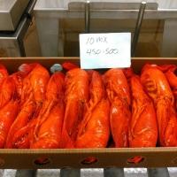 Canadian Lobsters (Homarus Americanus)