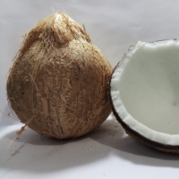 Matured Coconut : Manufacturers, Suppliers, Wholesalers and