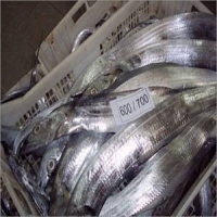 Frozen Pacific And Atlantic Mackerel Fish